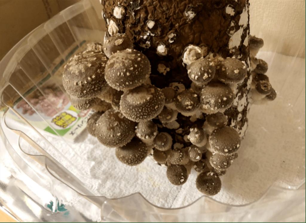 f:id:shimofoods:20190502131620p:image
